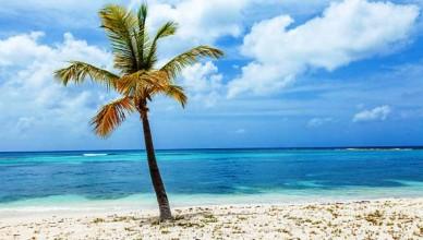 Lone Palm Tree on Beach on Tropical Island