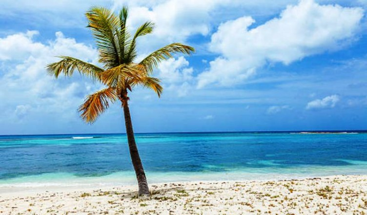 Lone Palm Tree on Beach on Tropical Island