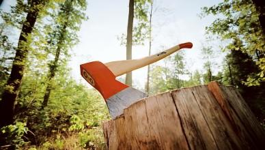 vyrubka-lesa