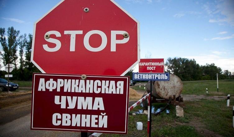 afrikanskaia-chuma-svinei-kak-ne-dopustit-zanos-infektcii-na-promyshlennye-svinofermy.900x0