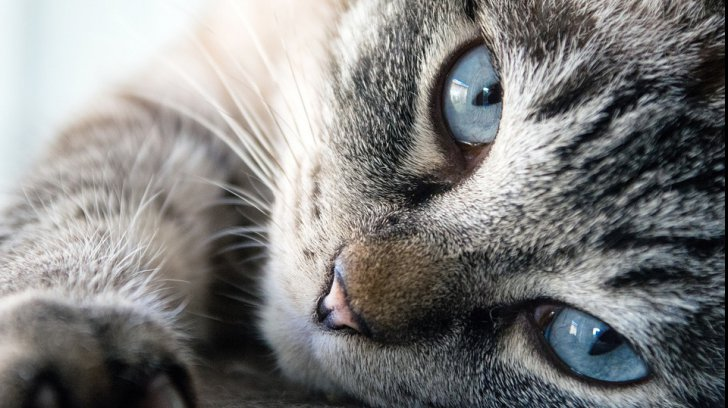 pisici_6_57032000