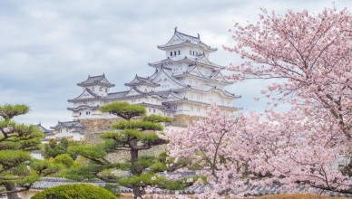 sakura-blossom-near-himeji-castle (1024x8192)