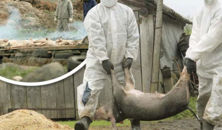 743097-1532455383-ministrul-agriculturii-nu-exista-antidot-pentru-pesta-porcina