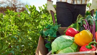 agricultura-ecologica-e1541746242596