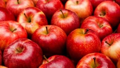 яблука-800x533