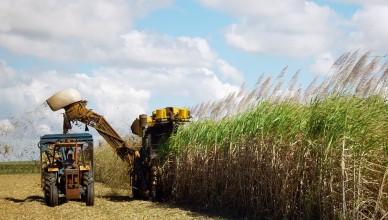 sugar-cane-harvesting-1553007
