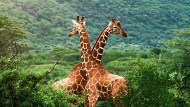 viata-salbatica-WWF-1170x658
