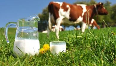 lapte-vaca
