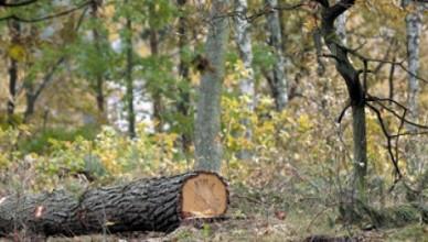 fsc-certificare-forestiera