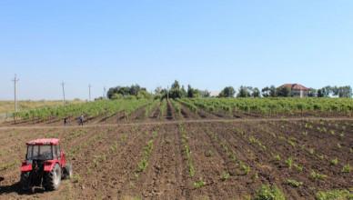Incepand-de-ieri--agricultorii-pot-depune-actele-pentru-subventii-de-la-stat-21378